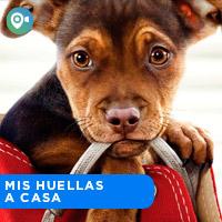 MIS HUELLAS A CASA CINEVIAJEROS - SAN MIGUEL - LIMA